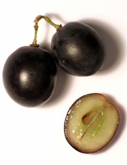 Dark-skinned grapes intended for wine producti...