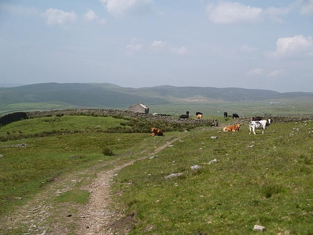 Rough Grazing - geograph.org.uk - 454761