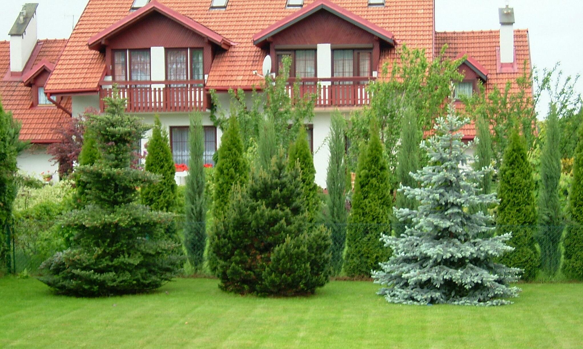 File Three Ornamental Conifers Fir Pine And Spruce2004 Jpg