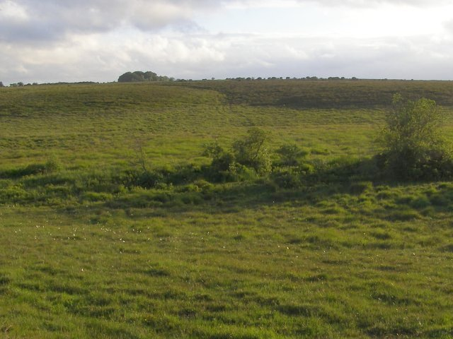 File:Valley mire to the west of Ferny Crofts, New Forest - geograph.org.uk - 468930.jpg