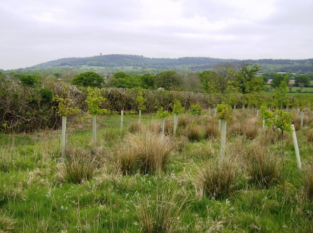 View towards Alfred's Tower - geograph.org.uk - 459915