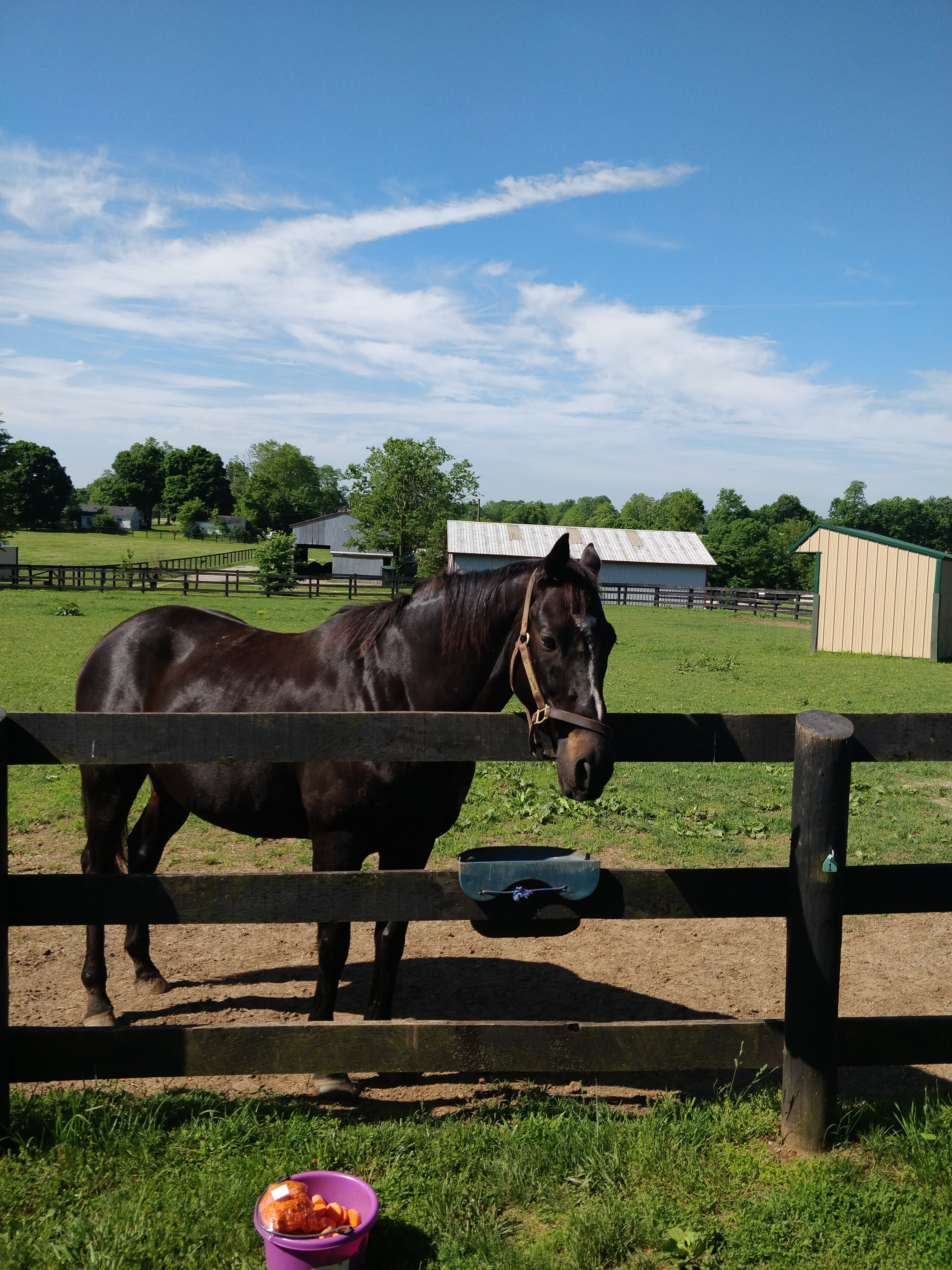 """Jim Hansel /""""Spirit/"""" Horse Colt  Print  16/"""" x 12/"""""""