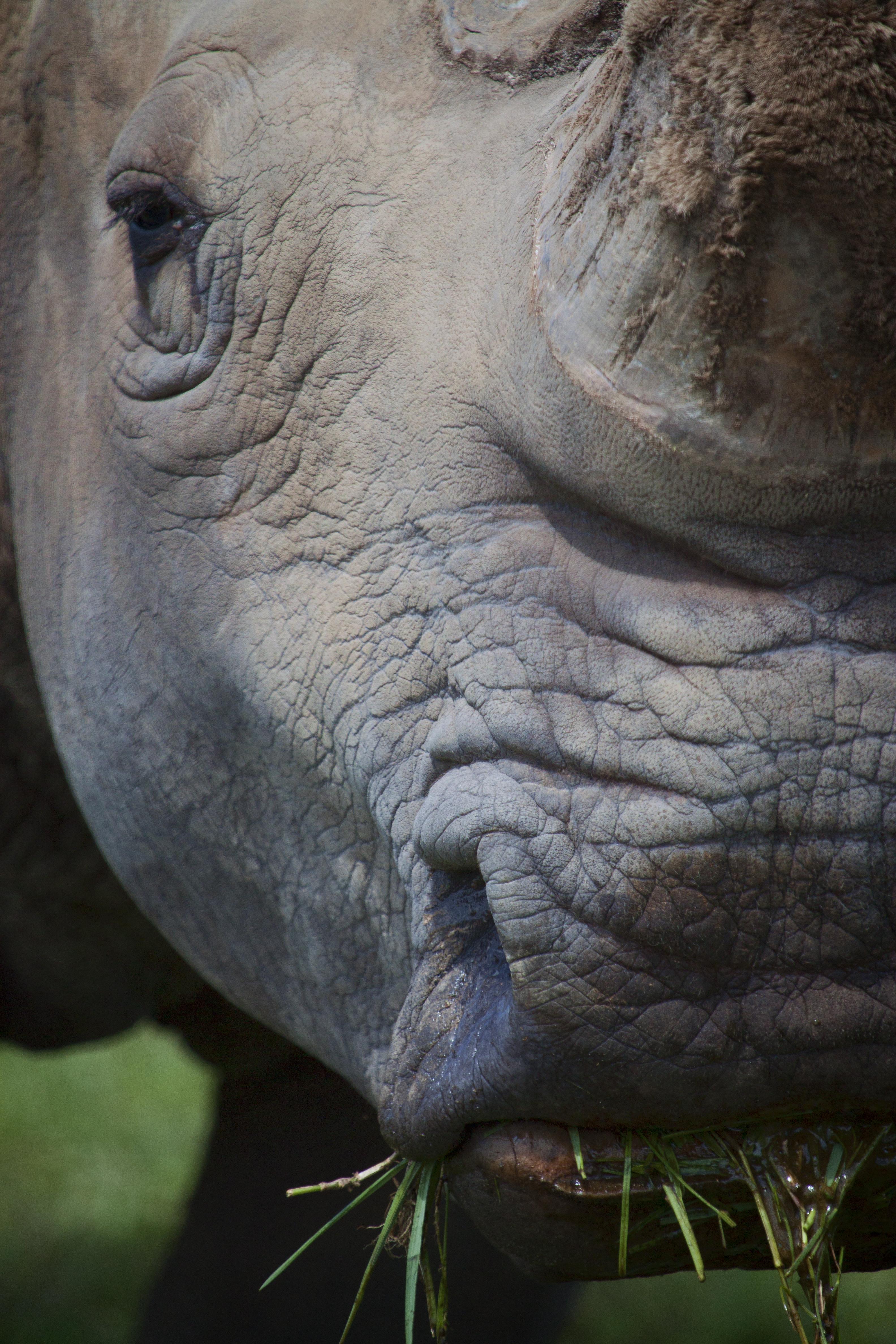 White Rhino 00025.jpg