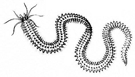 Worm-1.jpg