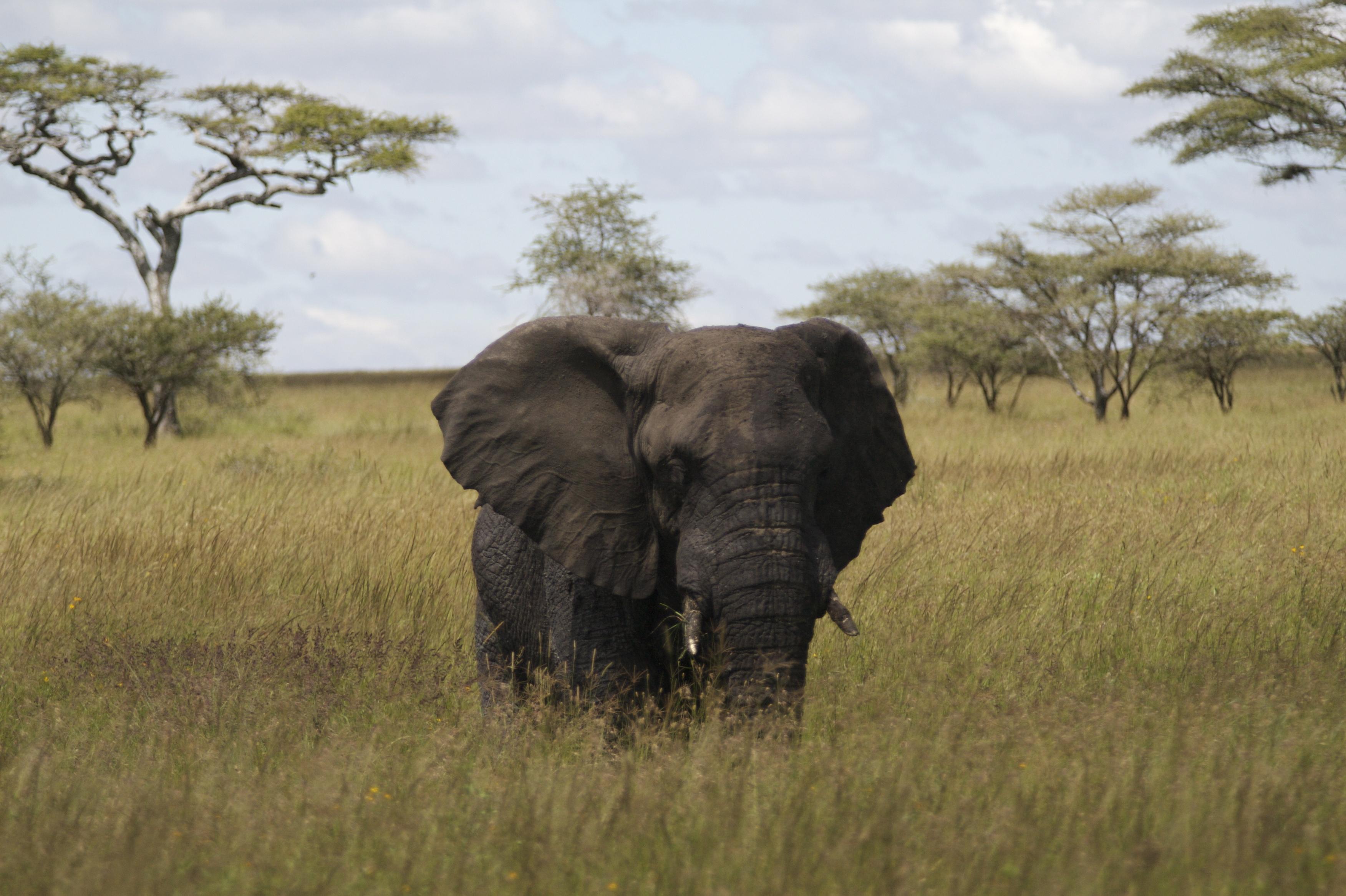 East Africa Safari Kenya & Tanzania Asilia Africa