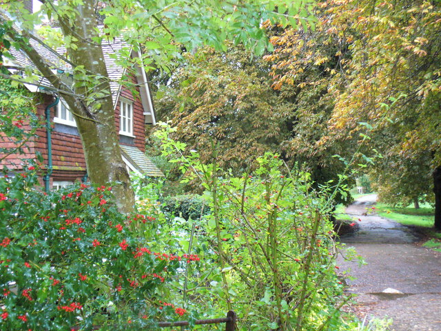 Autumn in East Clandon - geograph.org.uk - 264848