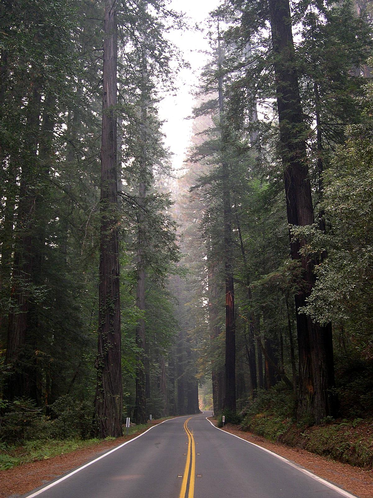 Humboldt Redwoods State Park Wikipedia