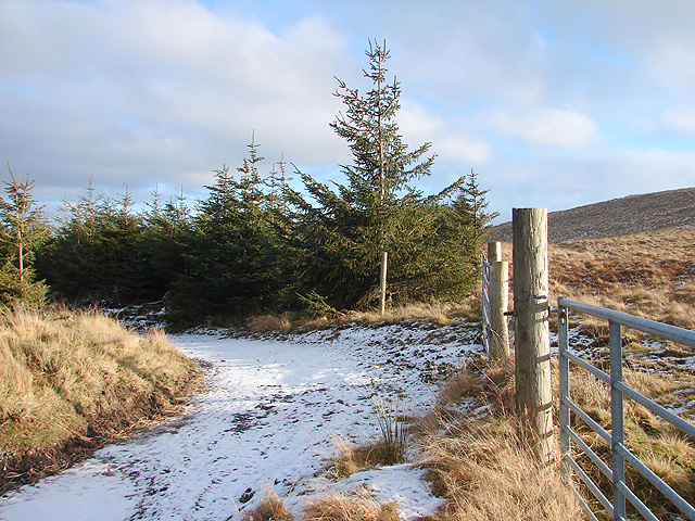 Back into the Hafren Forest - geograph.org.uk - 1115185