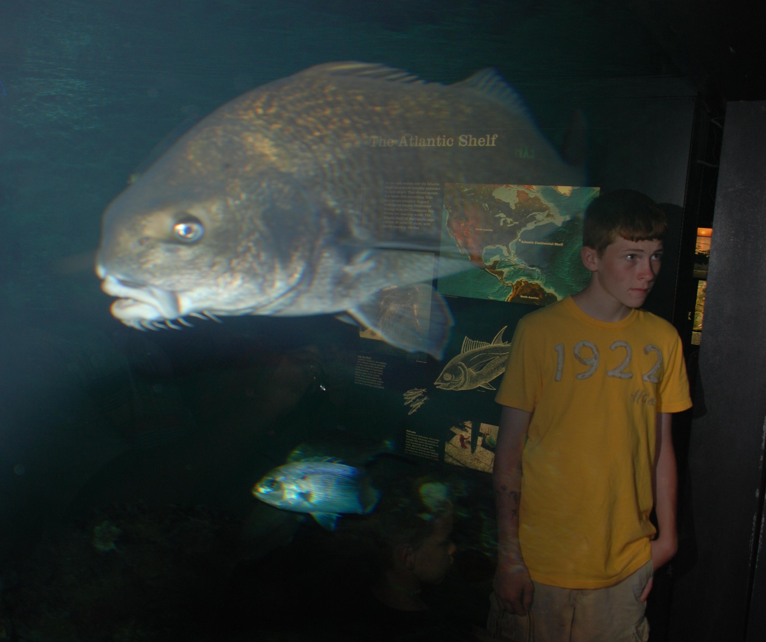 File Baltimore Aquarium Fish Reflection Wikimedia Commons