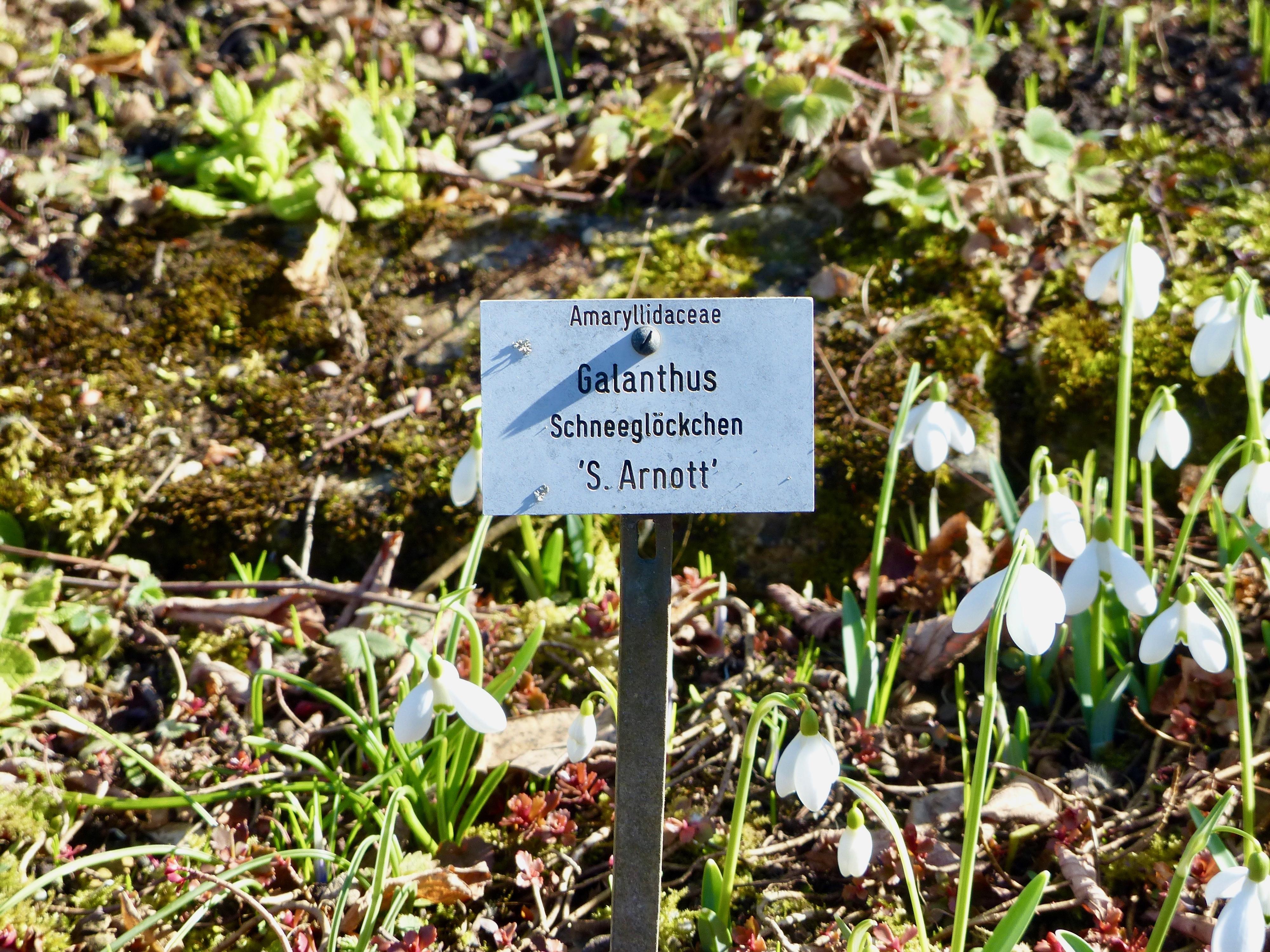 Filebotanischer Garten München Nymphenburg 2017 17jpg Wikimedia