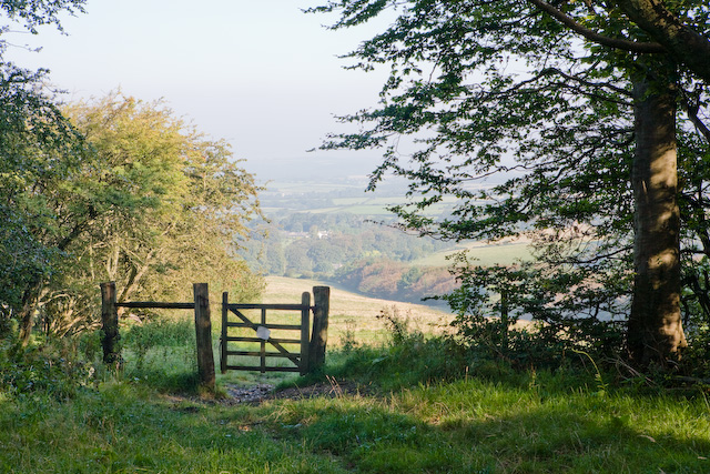 Bridleway and gate on the northern edge of Brighstone Forest - geograph.org.uk - 540055