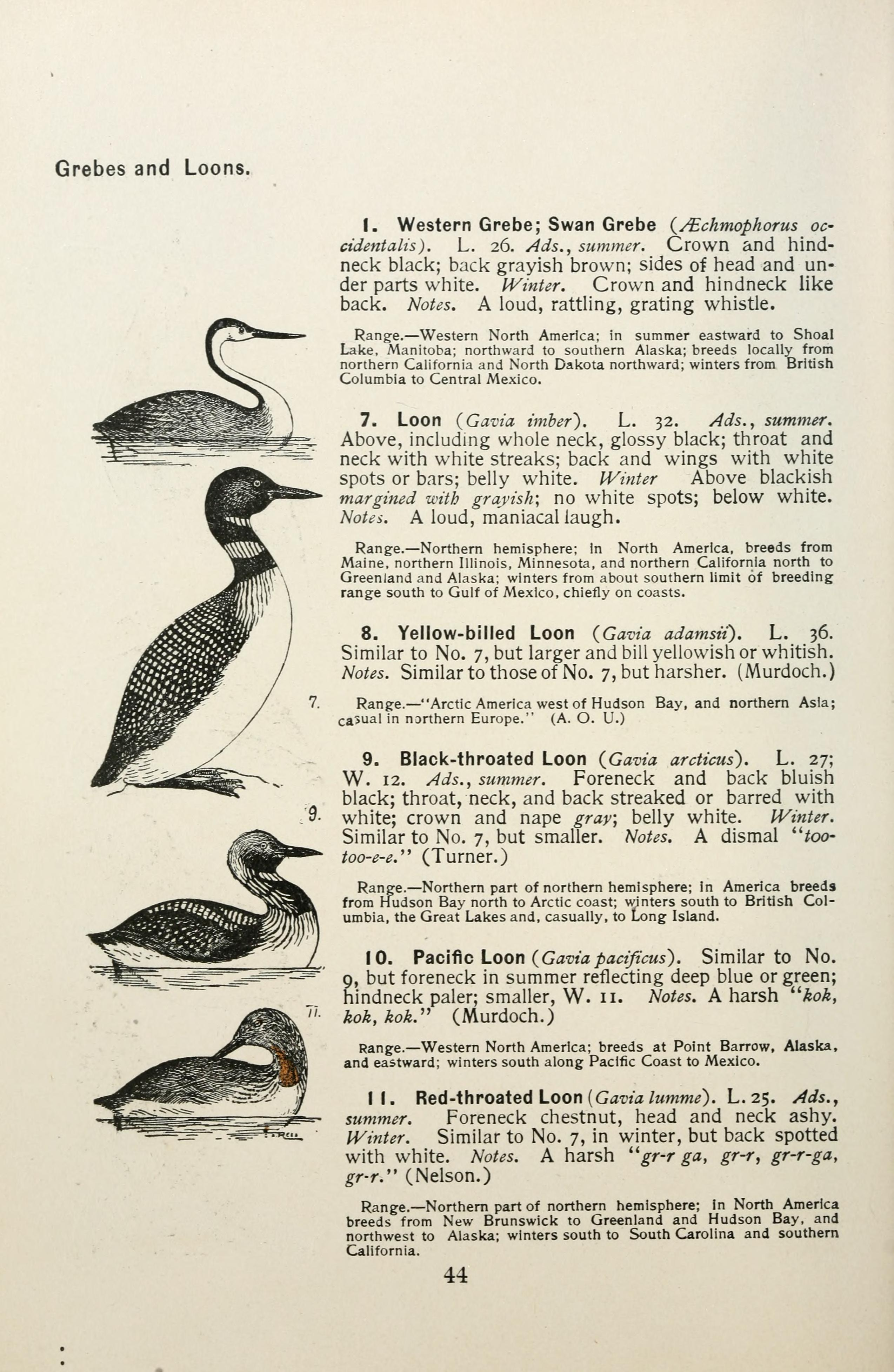 File:Color key to North American birds (Page 44) BHL7583556 jpg