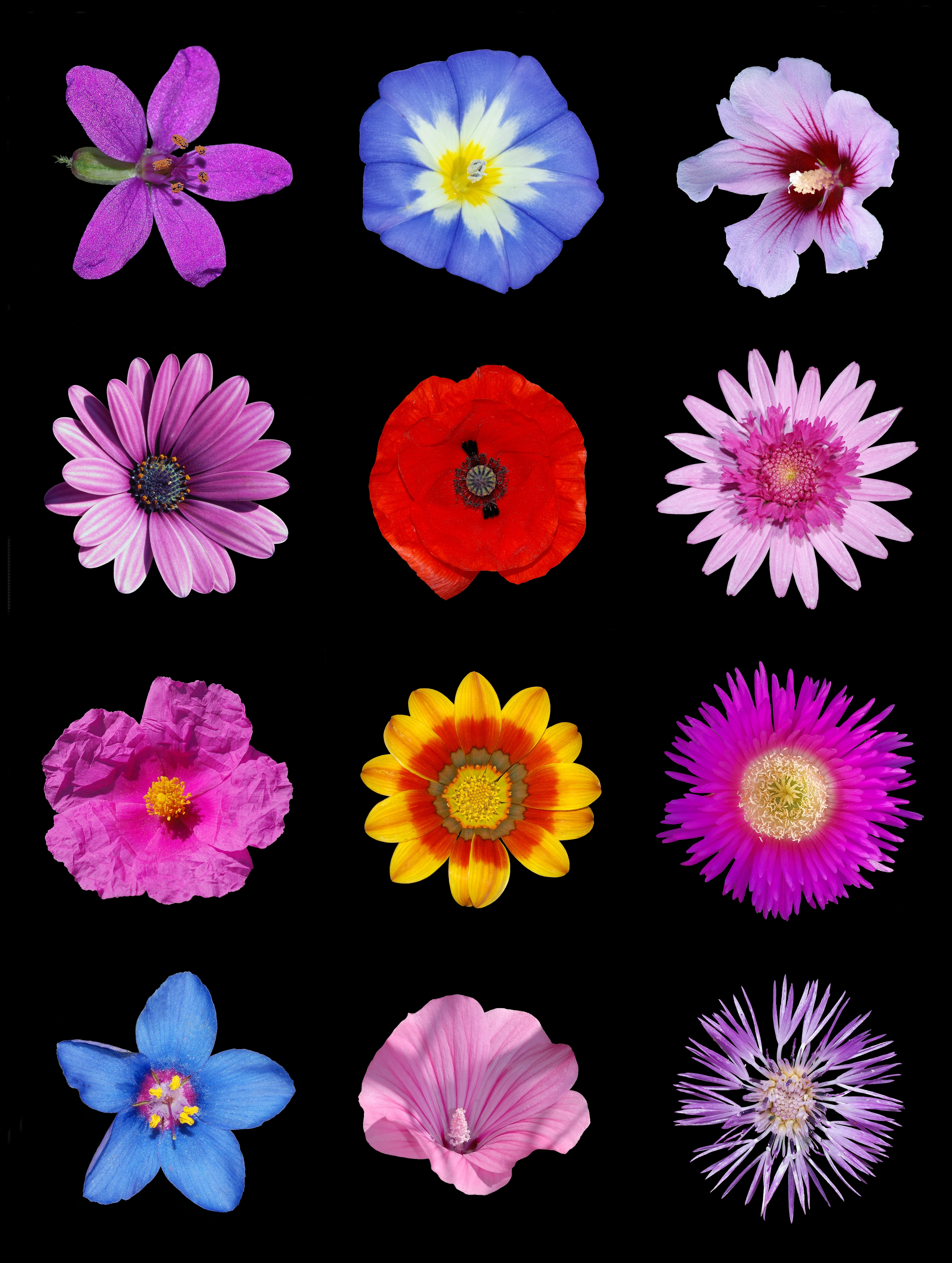 file colored flowers wikimedia commons