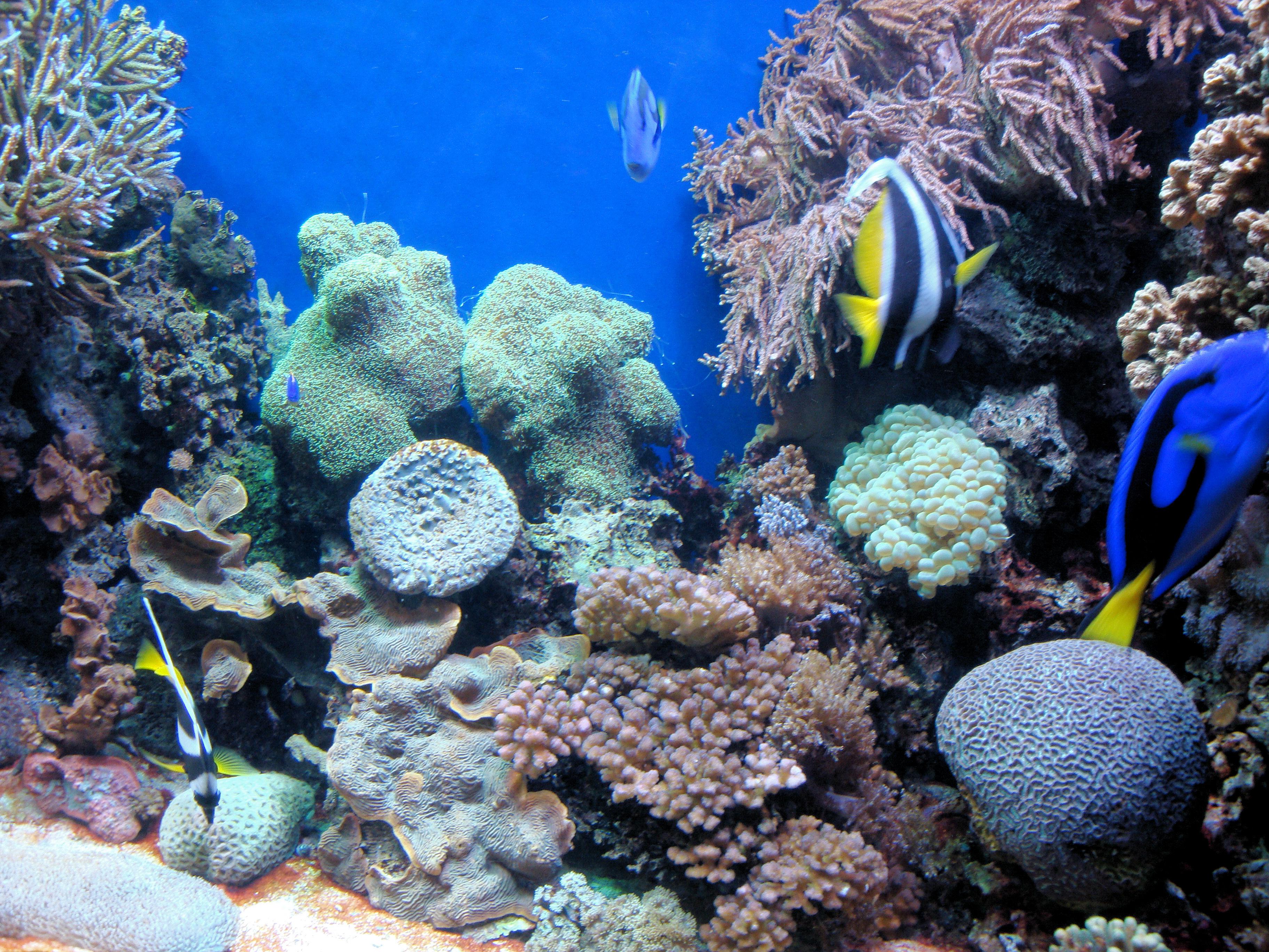 File Dsc26581 Monterey Bay Aquarium California Usa