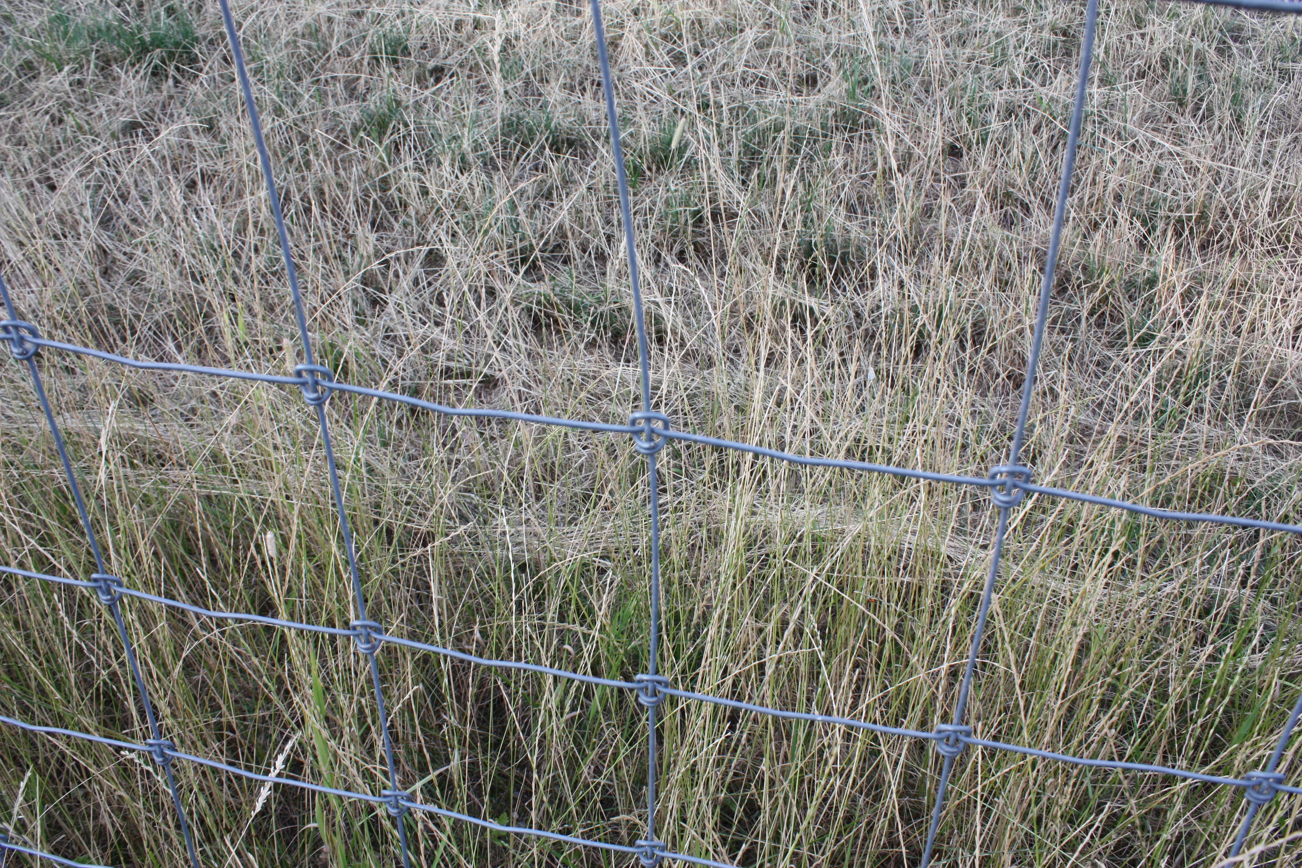 File:Drahtzaun 2010 PD 2.JPG - Wikimedia Commons
