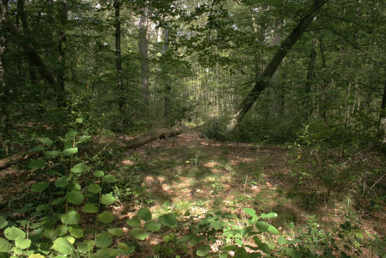 Description draved skov lysning1