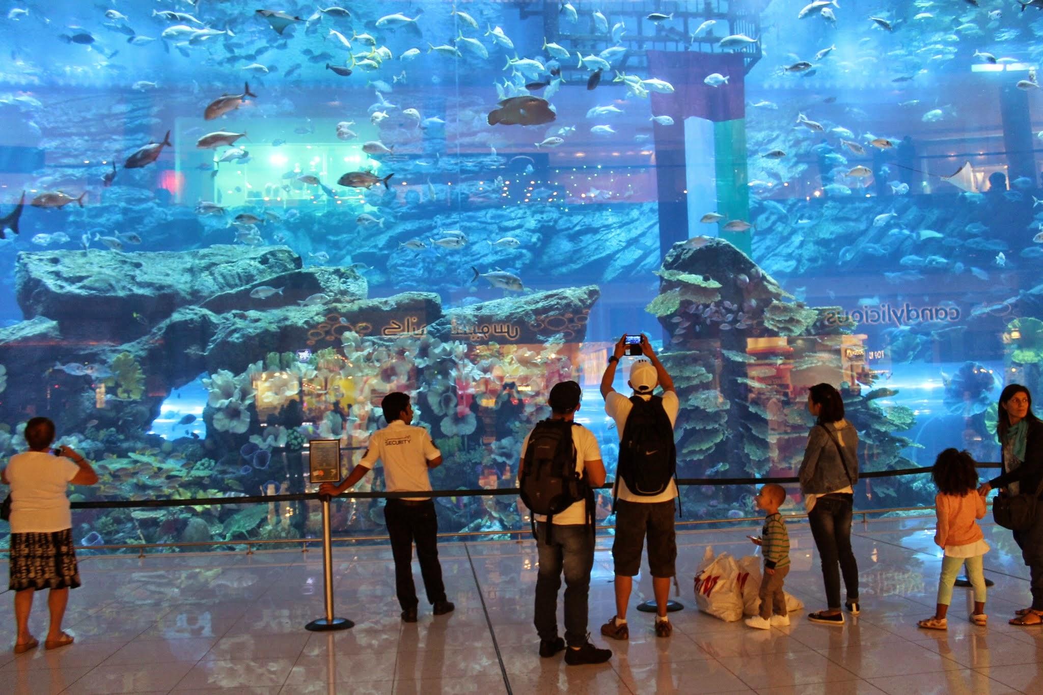 Risultati immagini per dubai aquarium