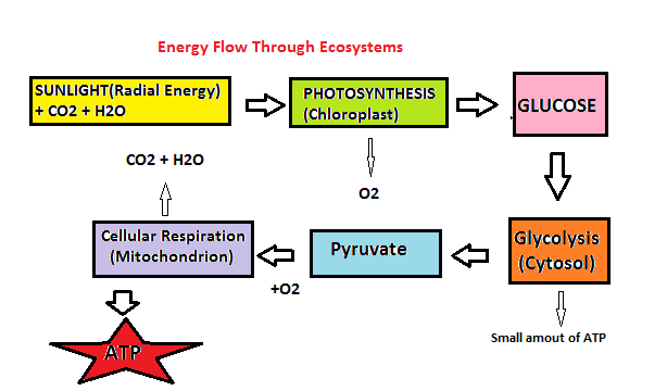 relationship between matter and energy in ecosystems lesson