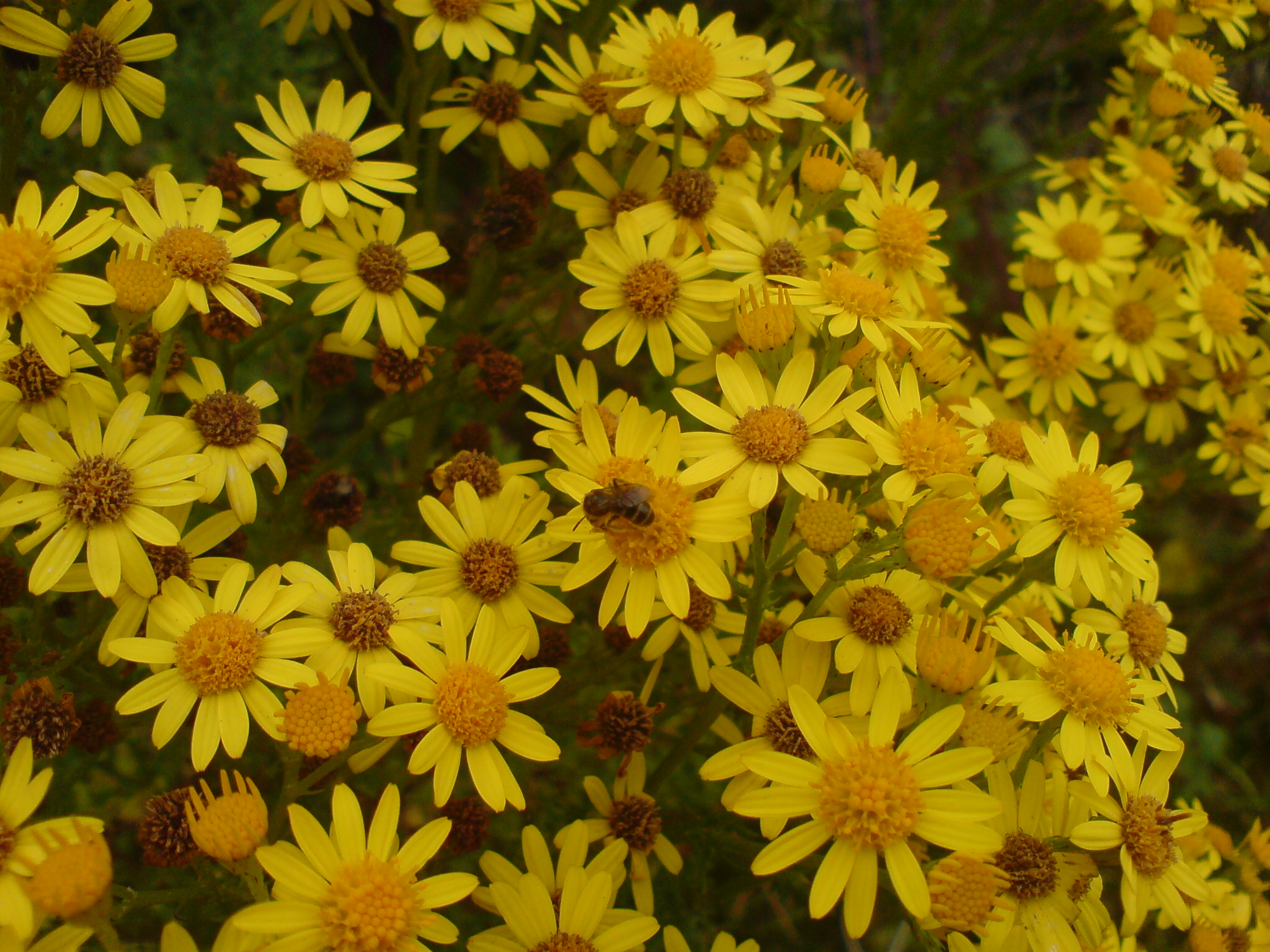 Bulbos de flores para las abejas