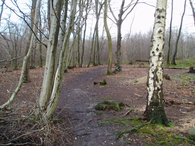 Footpath through Blakes Wood - geograph.org.uk - 314465