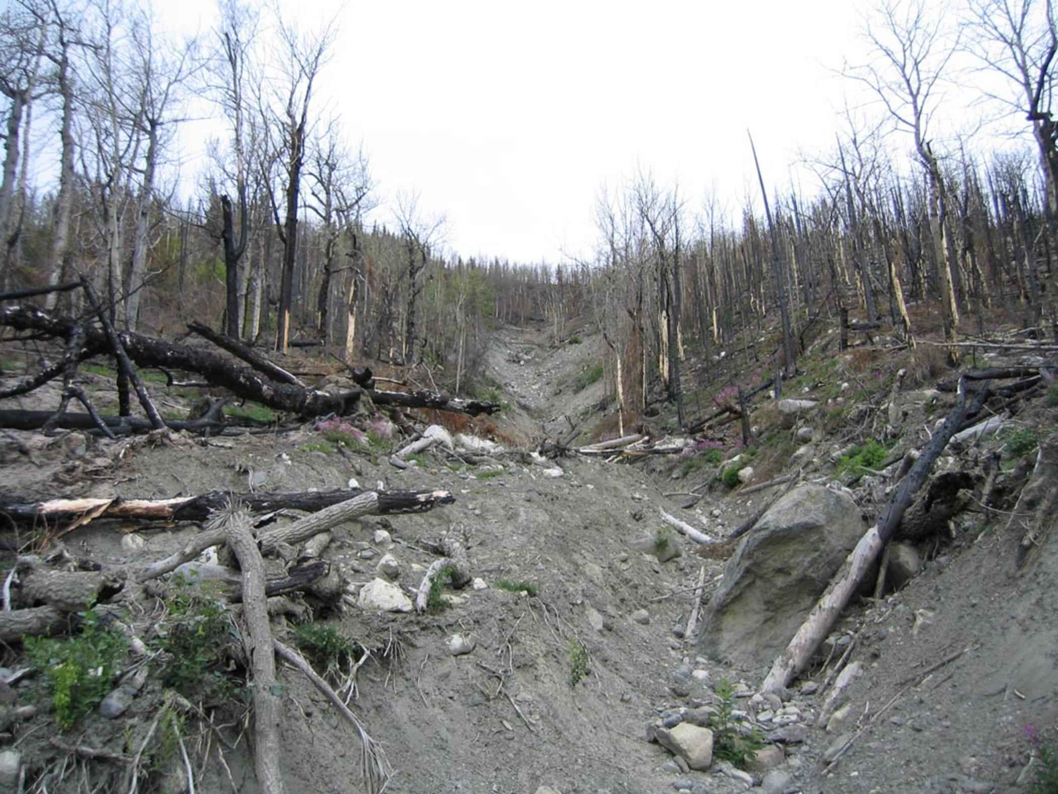 File:Forest after fire burn.jpg - Wikimedia Commons