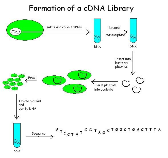 an analysis of the dna molecules and the possibility to make clones The dna and proteins of interest are microscopic and typically mixed in with many other molecules including dna or proteins irrelevant to our interests many techniques have been developed to isolate and characterize molecules of interest.