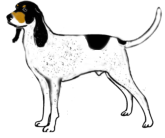 Gascon saintongeois - Dog Scanner