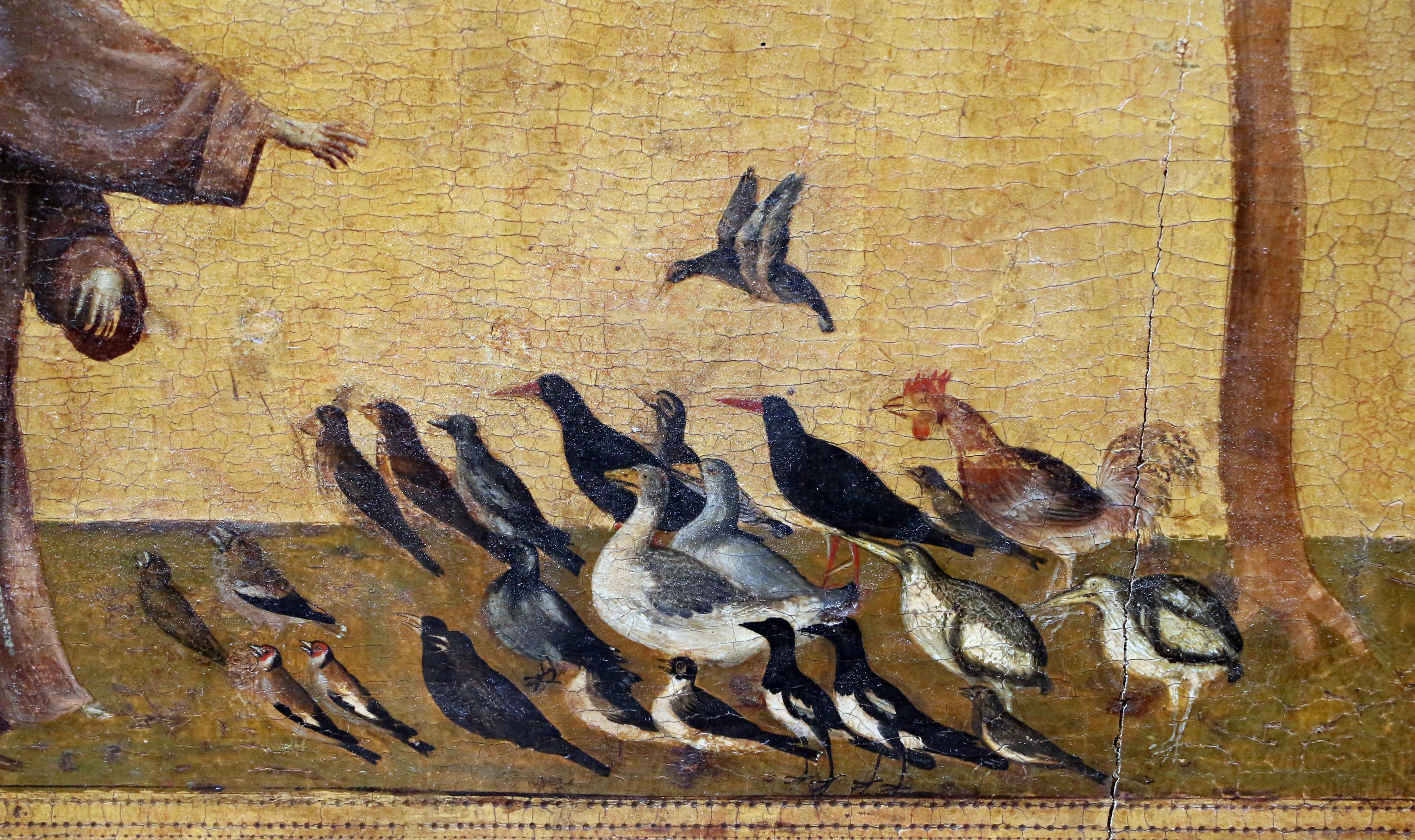 File:Giotto, predica agli uccelli, 1297-99 ca., 02.