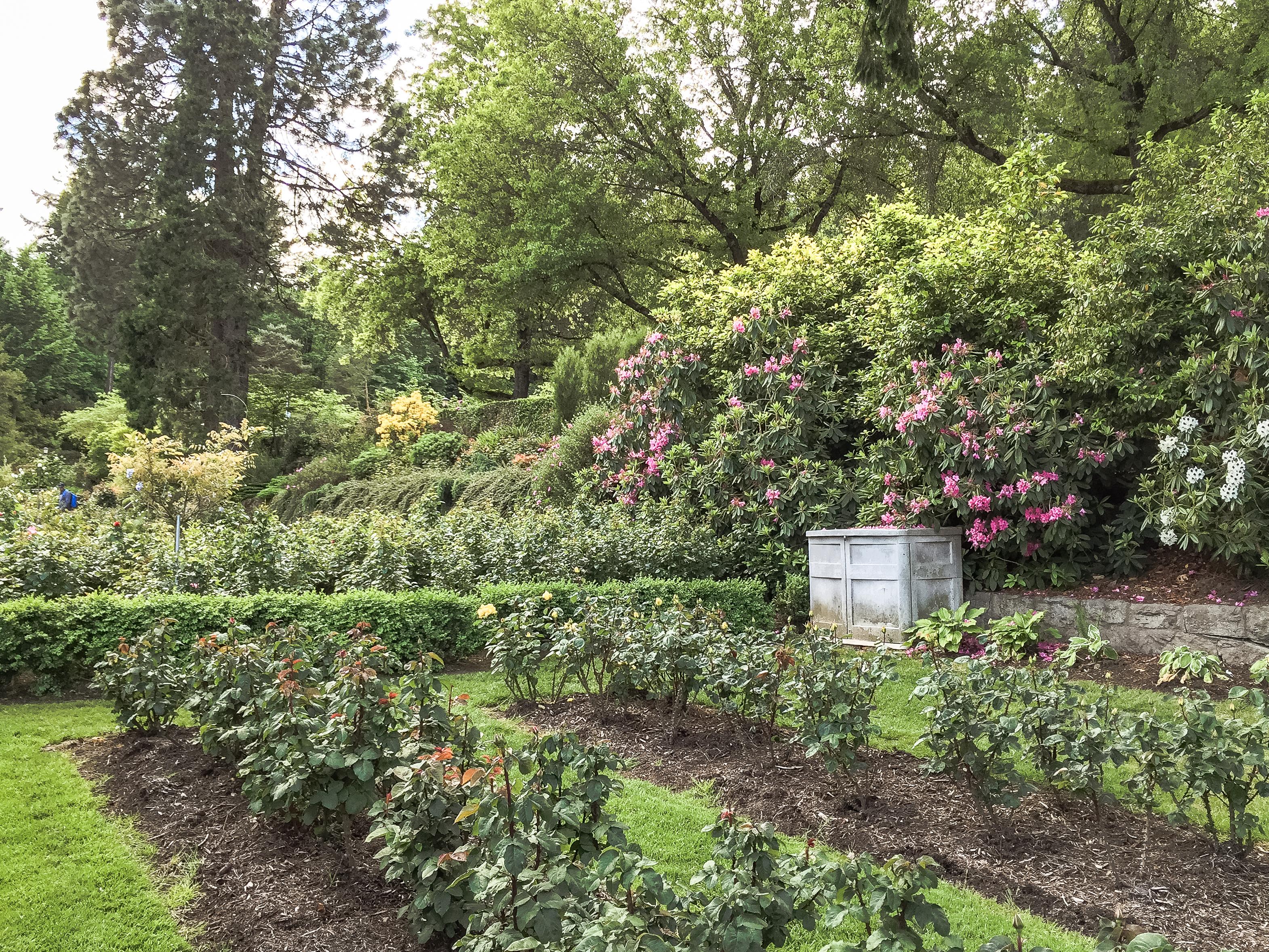 File International Rose Test Garden Portland Oregon 23738581470