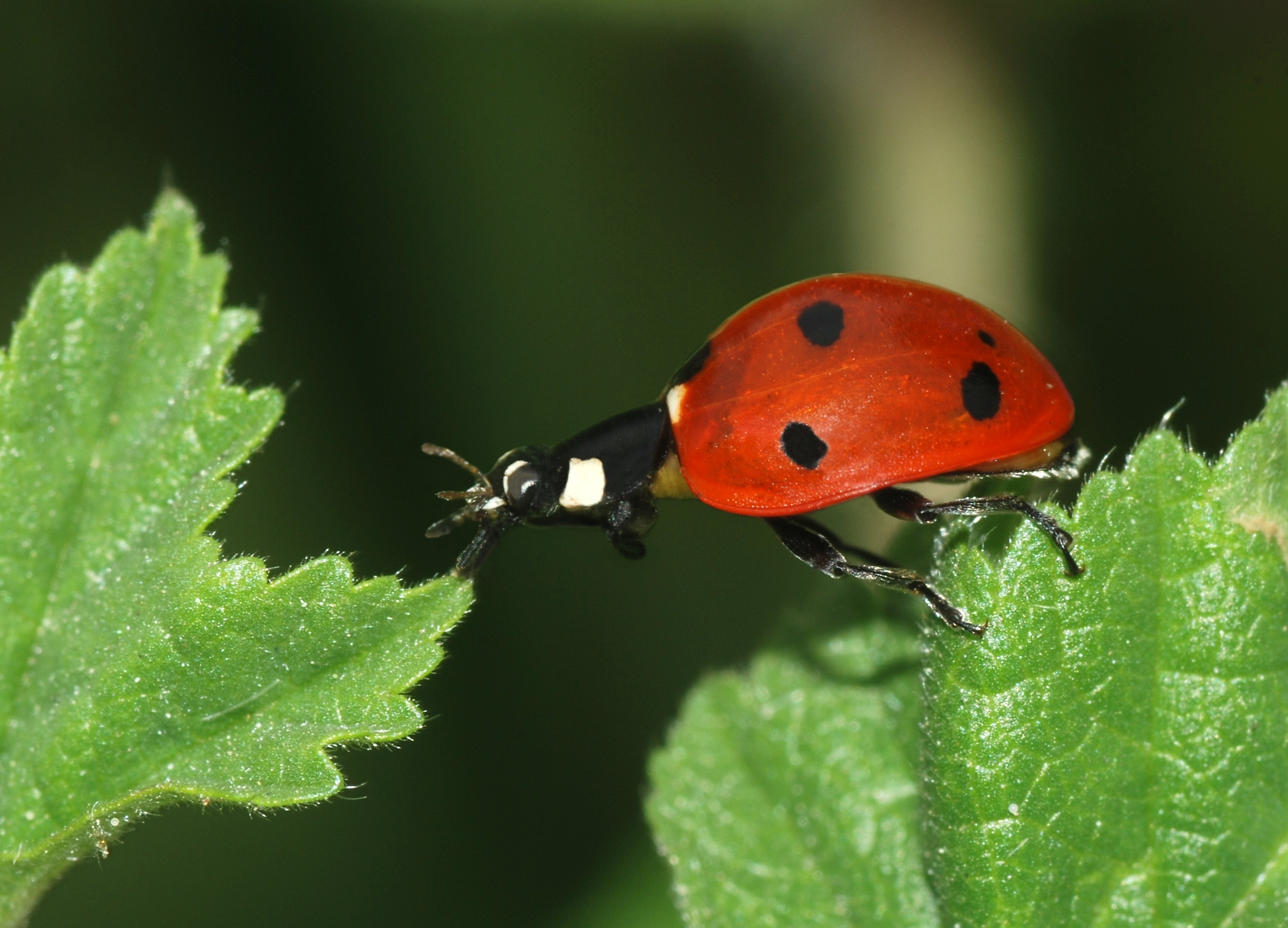 Image Result Forerfly And Ladybug