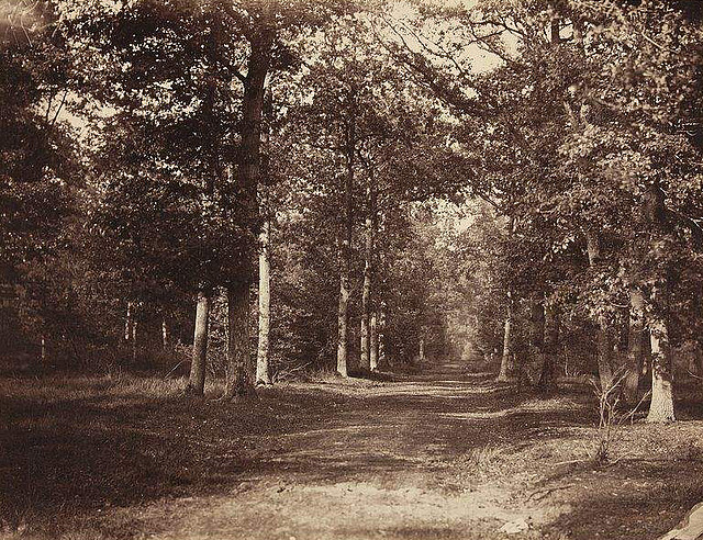 Forest of Fontainebleau