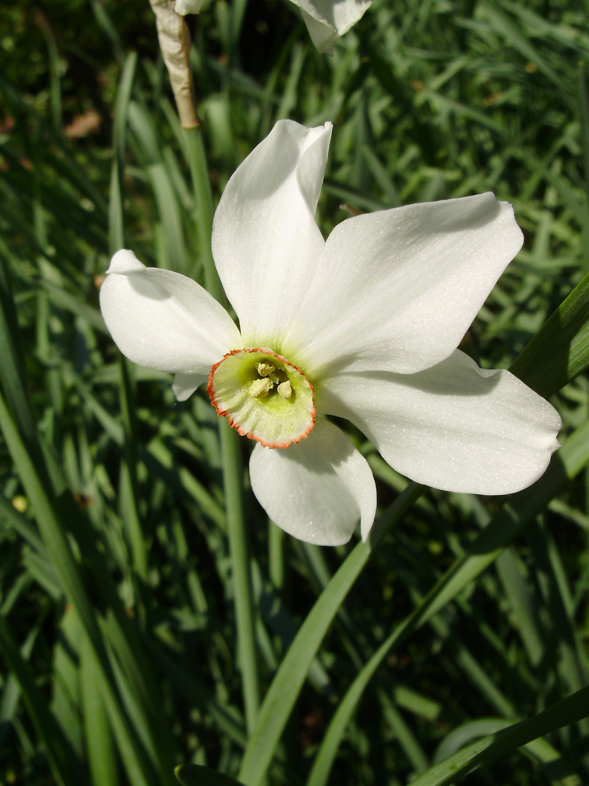 Echo And Narcissus Flower Romantic Flowers: Narc...