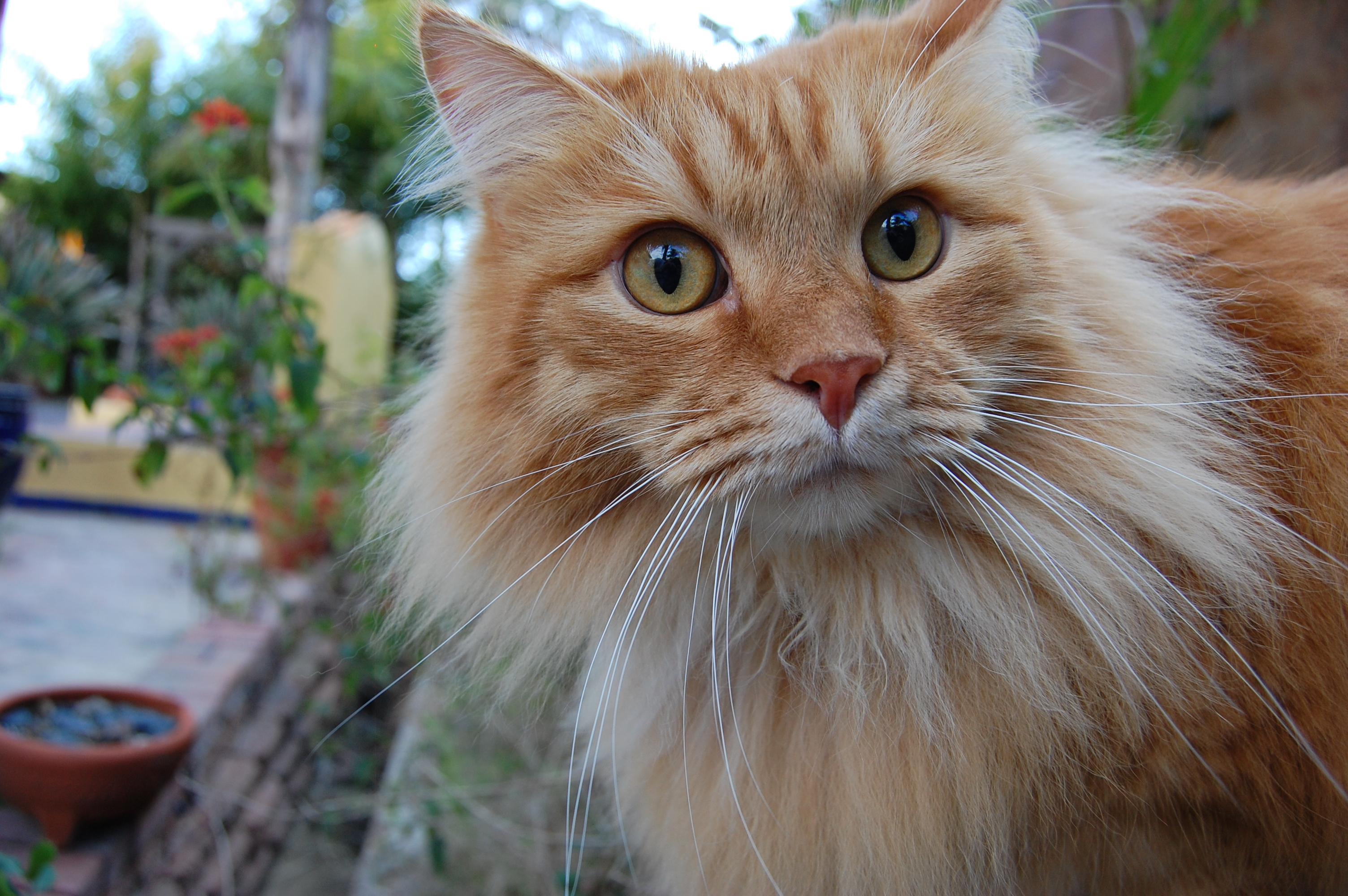 Furminator Cat Long Hair Version Uk