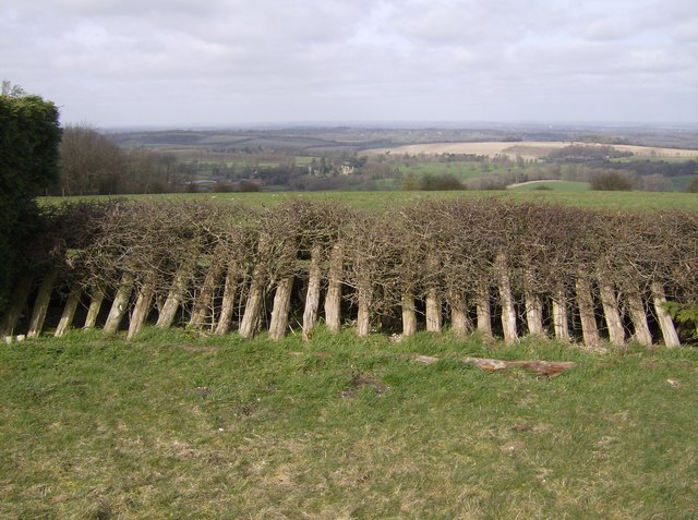 Over Watership Down - geograph.org.uk - 361231