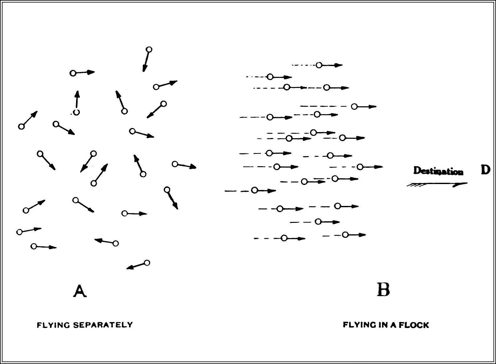 http://upload.wikimedia.org/wikipedia/commons/e/e6/PSM_V84_D214_Flocking_habit_of_migratory_birds_fig1.jpg