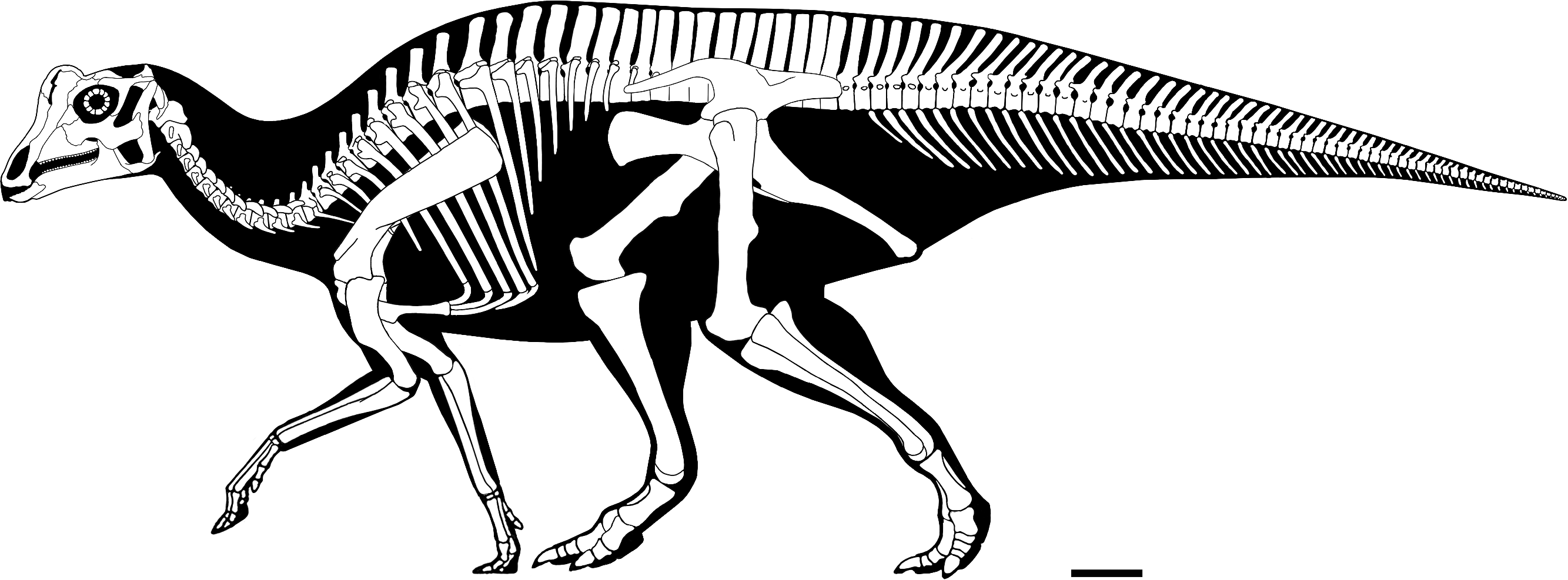 Image Result For Psittacosaurus Coloring Pages