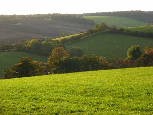 File:Pastures, Bledlow Ridge - geograph.org.uk - 1024323.jpg