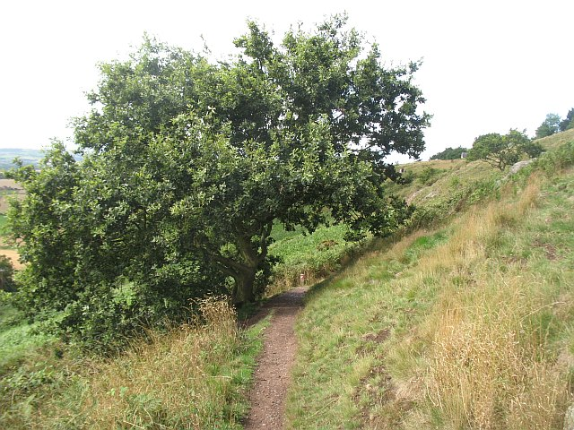 Path, Lyth Hill - geograph.org.uk - 1614194