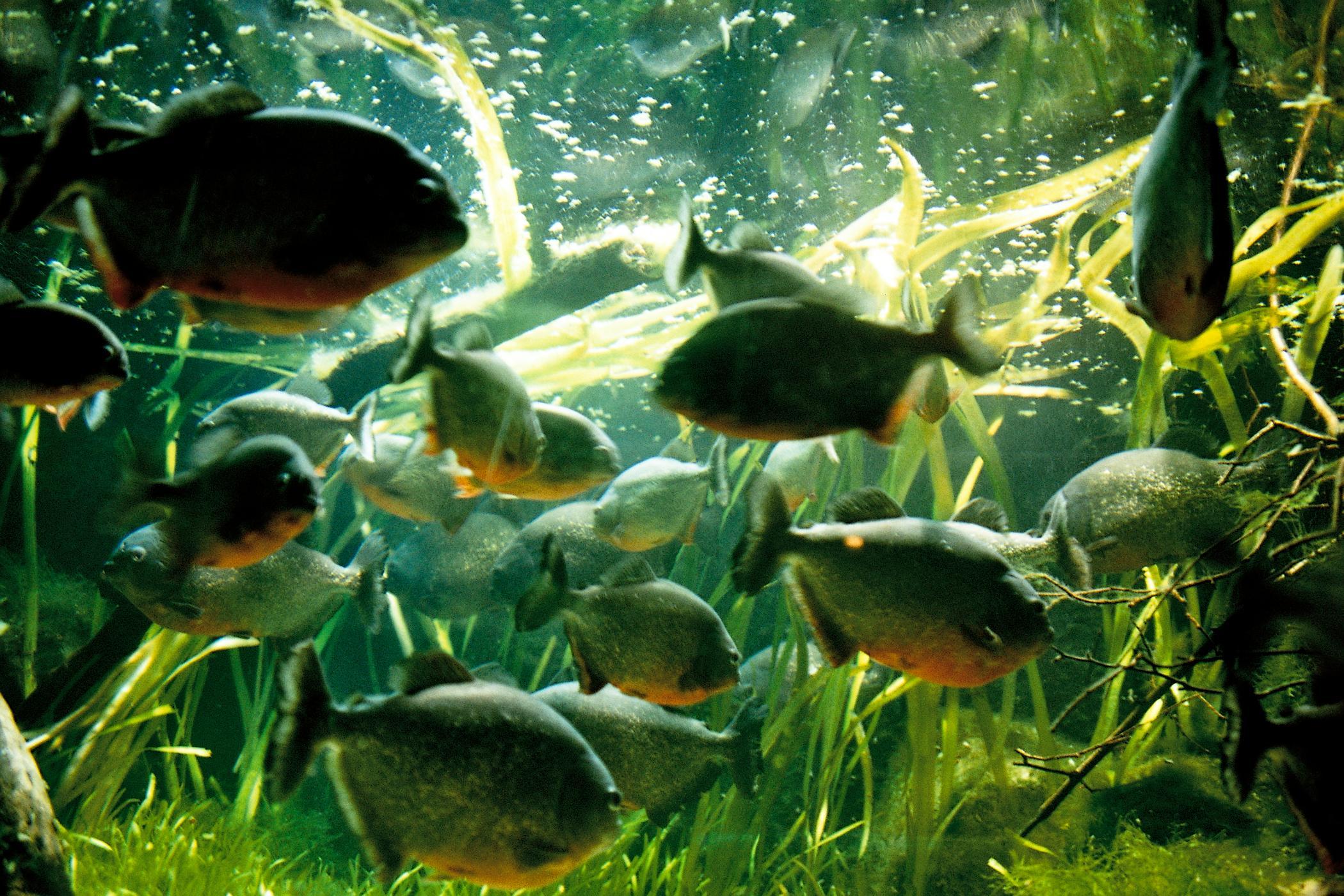 Image Result For Aquarium Dimensions