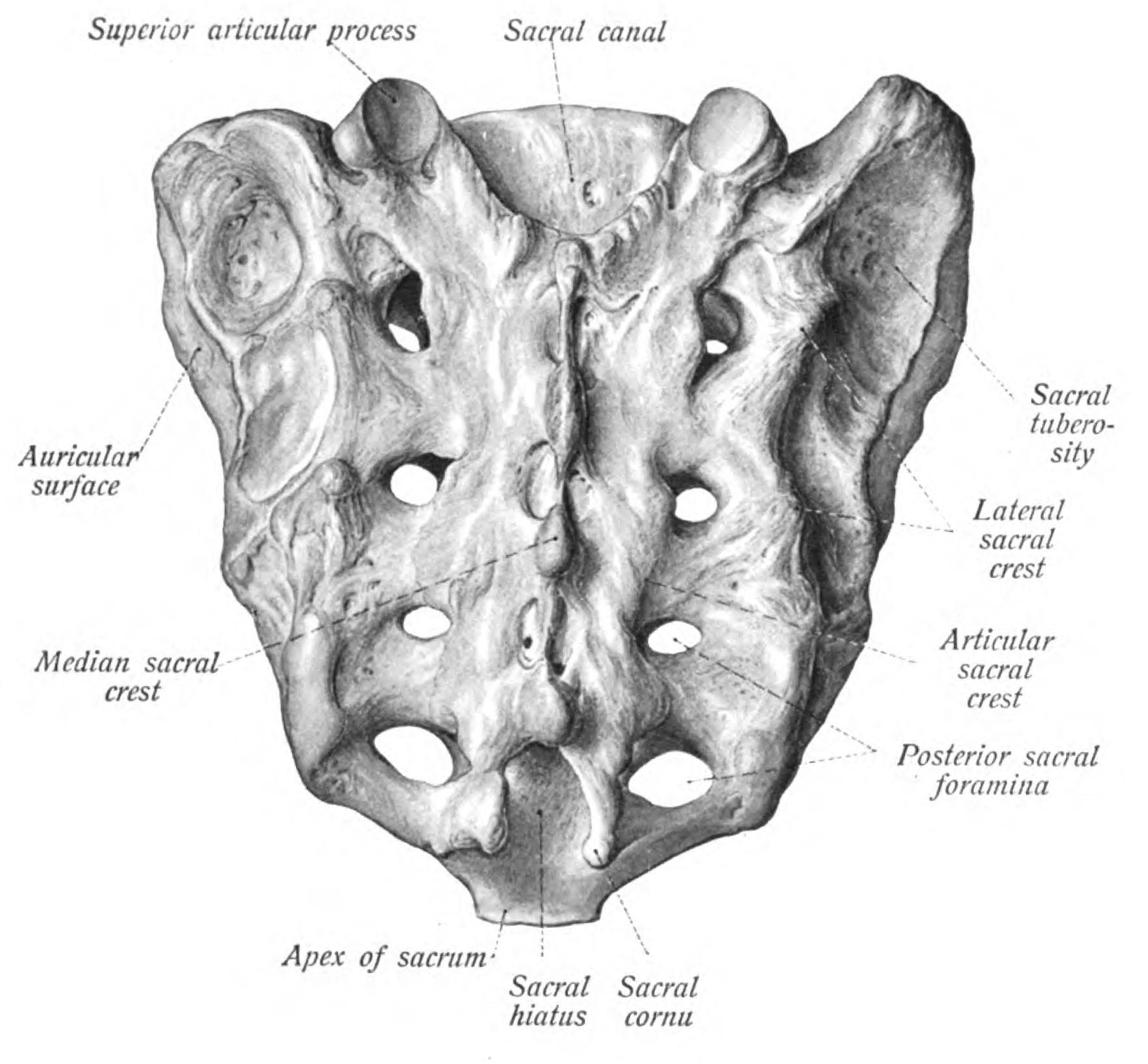 File:Sobo 1909 13.png - Wikipedia