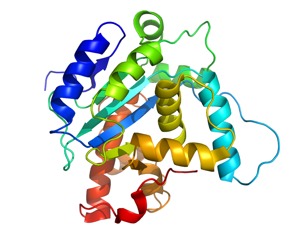 Spombe_Pop2p_protein_structure_rainbow?ca\=0 protein ribbon diagram to wiring diagram ribbon model protein  at creativeand.co
