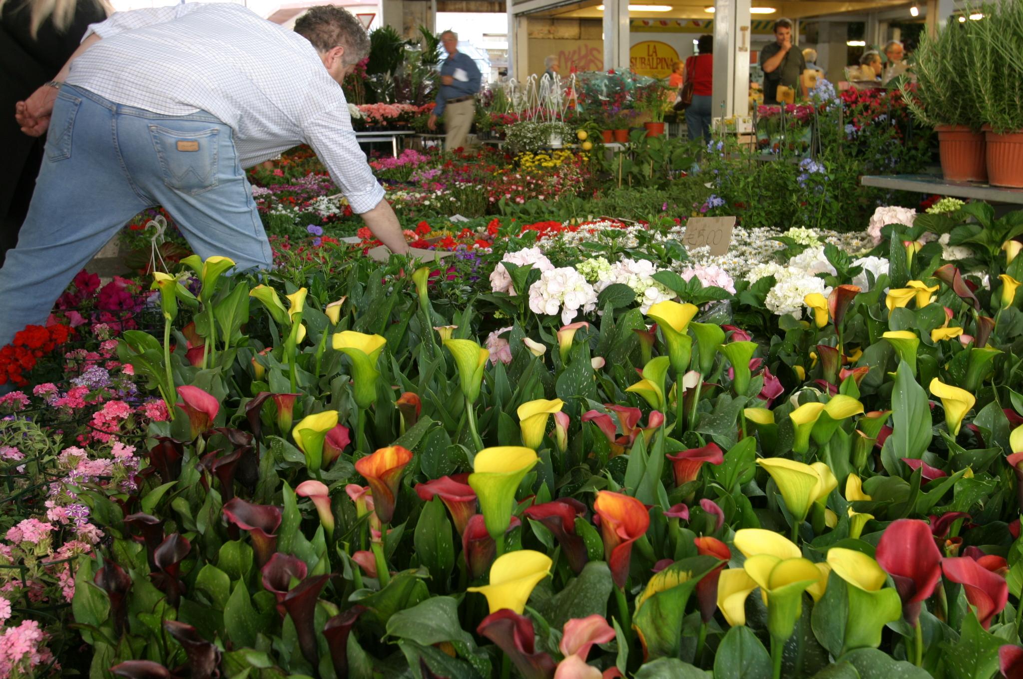 File Ventimiglia flowers market Wikimedia mons