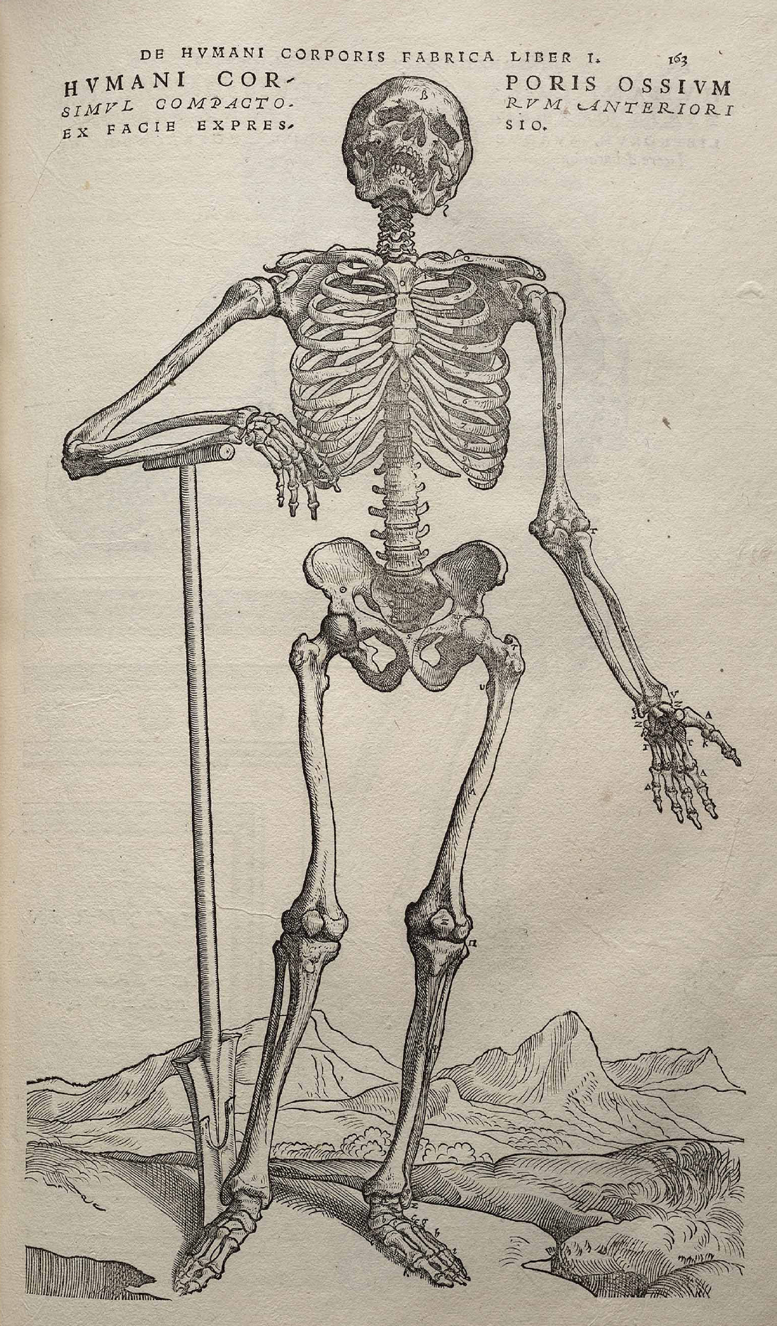 https://upload.wikimedia.org/wikipedia/commons/e/e6/Vesalius_Fabrica_p163.jpg