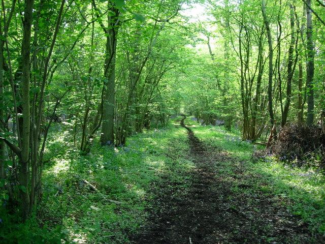 Woodland Track - geograph.org.uk - 168166