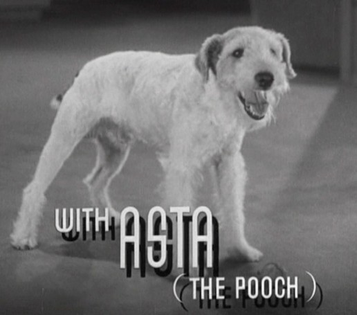 Asta from 'The Thin Man' | wire fox terrier | Tacky Harper's Cryptic Clues