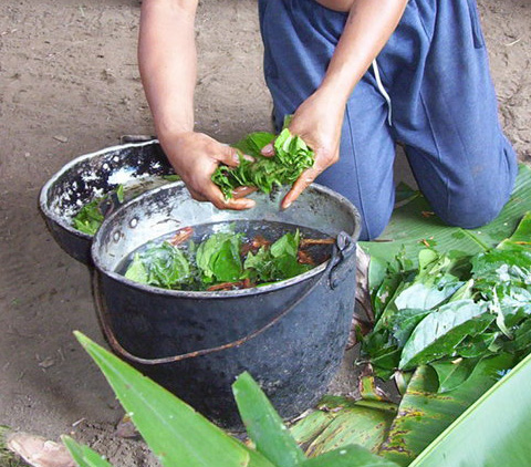 Ayahuasca Honored for Its Healing Properties by Peruvian and Brazilian National Governments