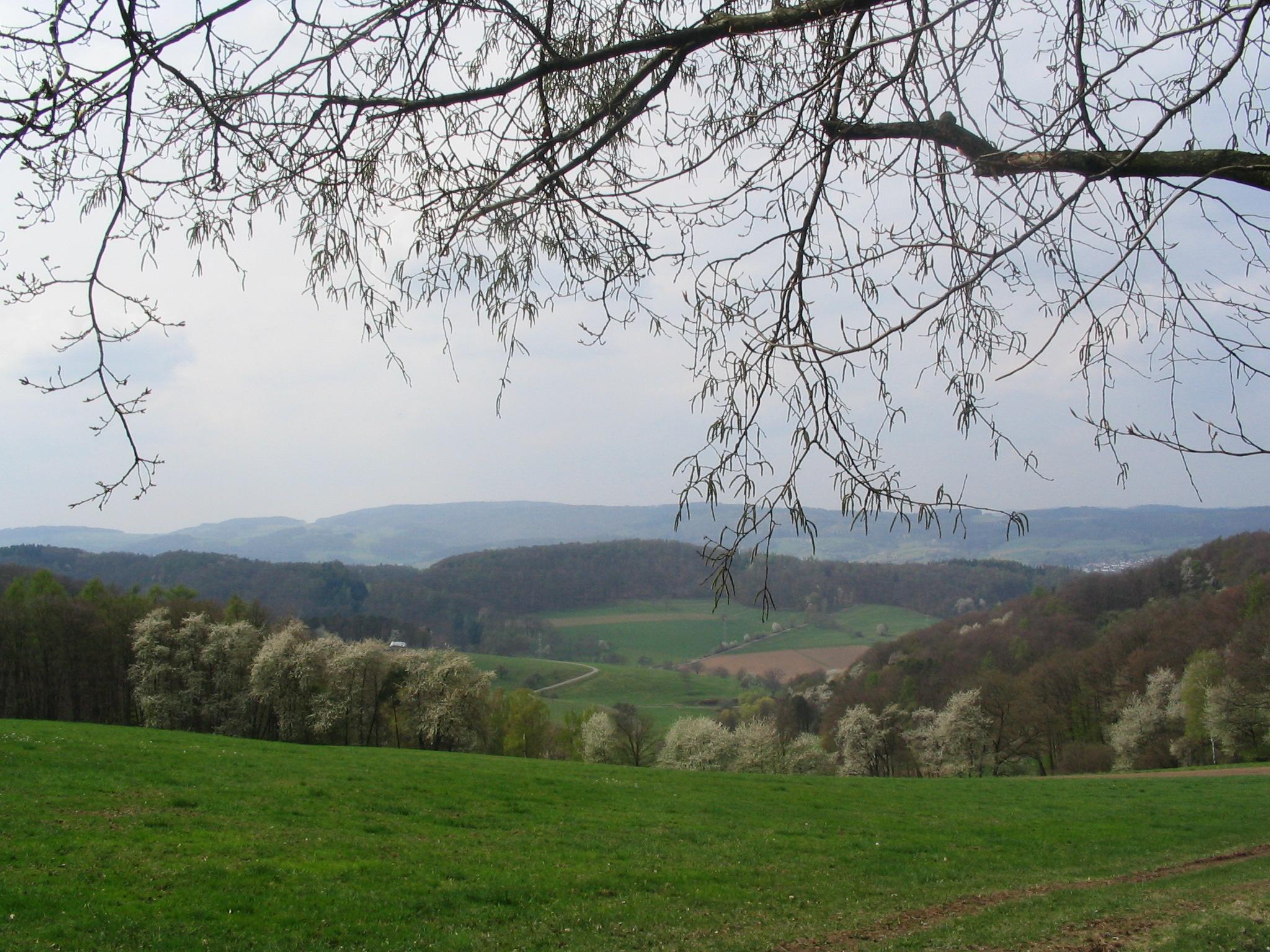 Böllstein
