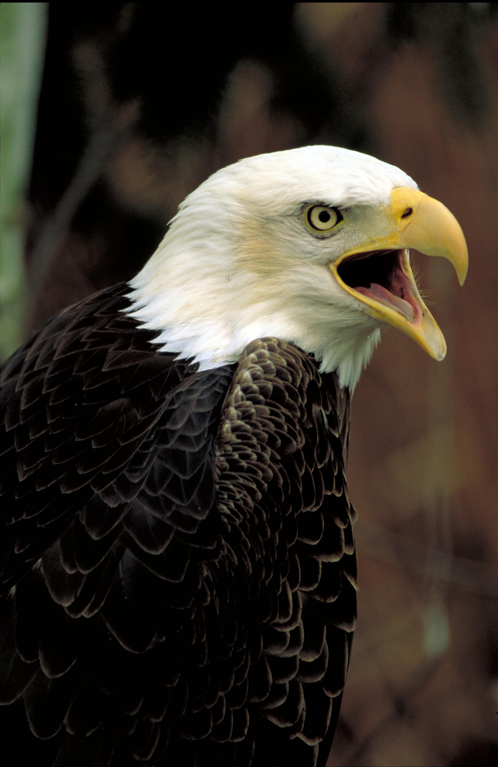 Bald Eagle Dr Ste B Marco Island Florida