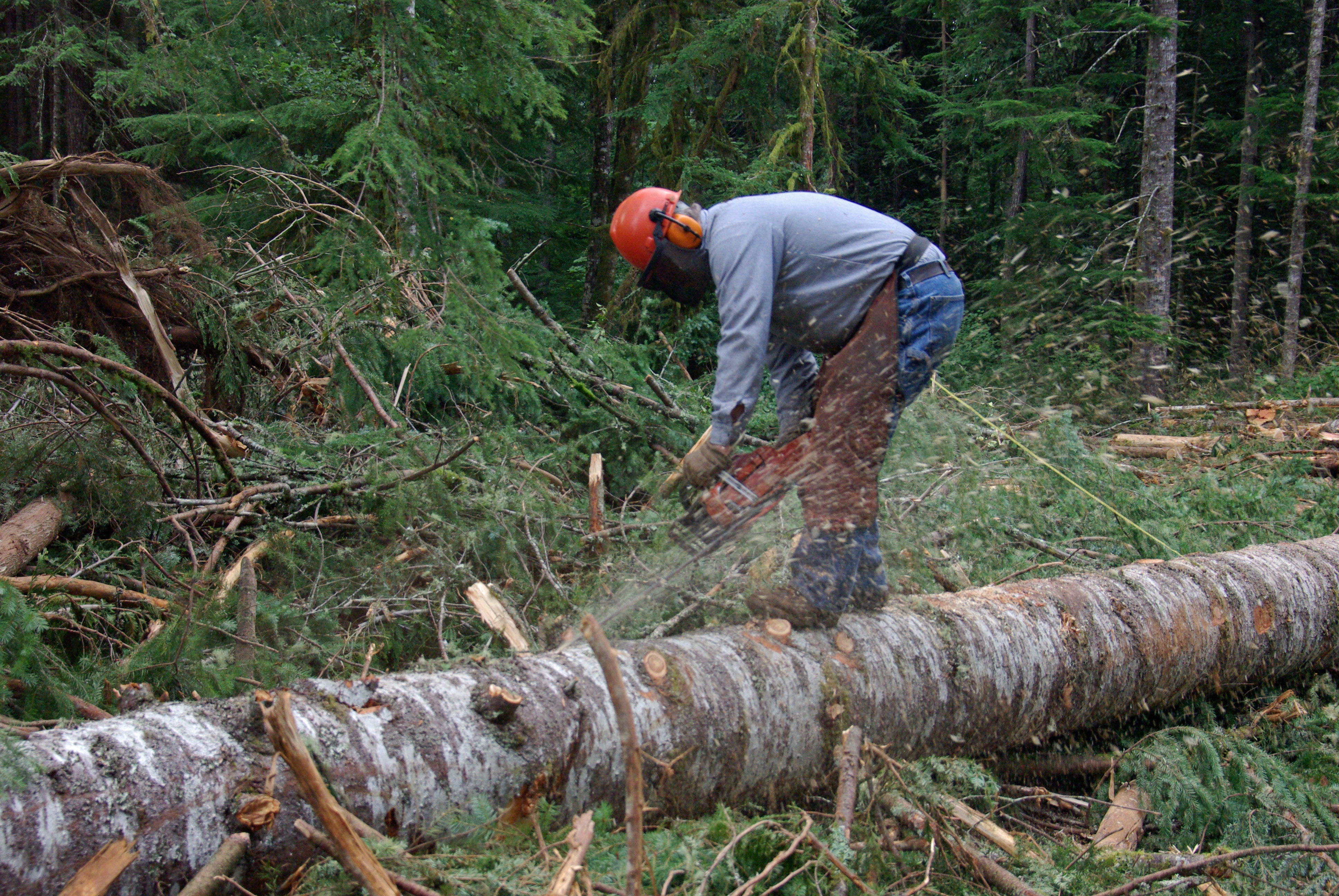 Log bucking - Wikipedia