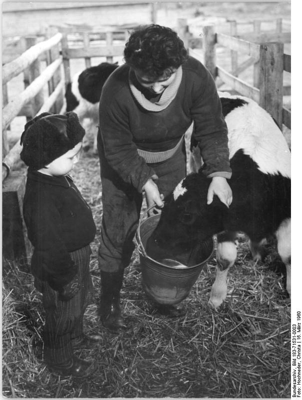 Fast In German >> File:Bundesarchiv Bild 183-71531-0003, Bäuerin mit Kind im Stall.jpg - Wikimedia Commons